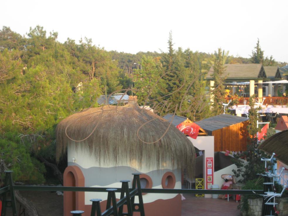 Saz Çatı